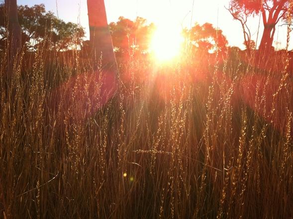 sunny-grasses-1632589